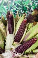 Raw purple corn photo
