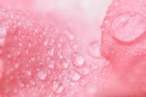 gotas de agua sobre pétalos de flores