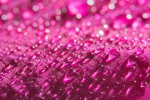Water drops on flower petals photo