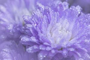 flor de fondo de cerca