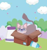 cute kitty in cardboard box with food outdoor pets