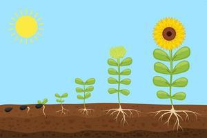 Ilustración de diseño de vector de etapas de crecimiento de plantas