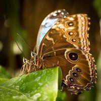 Tropical Butterflies. photo