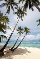 Coconut palms on tropical beach photo