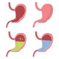Ilustración de diseño de vector de estómago aislado sobre fondo blanco
