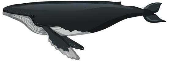 una ballena en estilo de dibujos animados aislado sobre fondo blanco