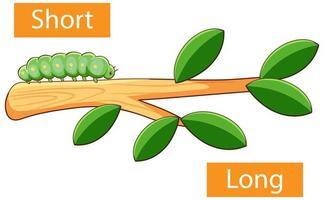 adjetivos opuestos palabras con corto y largo vector