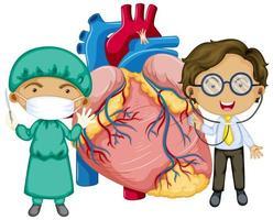 corazón humano con dos doctores personaje de dibujos animados
