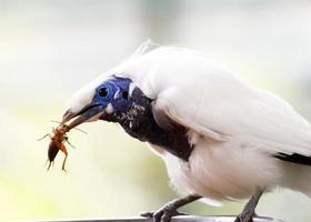 brid with prey photo