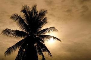 Palms and sun, tropical sunset taken in bangkok, thailand
