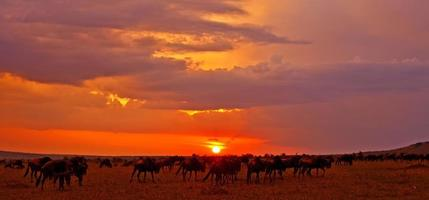 African sunset over the Maasai Mara photo