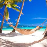 Straw hammock in the shadow of palm on tropical beach