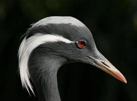 Close-up of a Crane