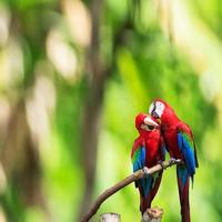 The potrait of Blue & Gold Macaw photo