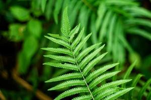 Close-up of fern leaves photo