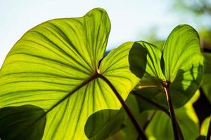 luz del sol a través de hojas verdes foto