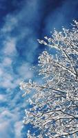 White tree against a blue sky photo