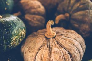 Rustic group of pumpkins photo