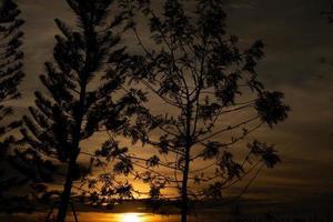 vista de una puesta de sol a través de árboles foto