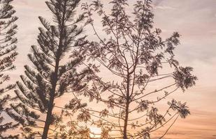 árboles al atardecer foto