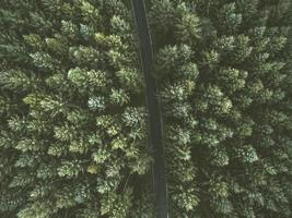 Aerial view of a road between trees