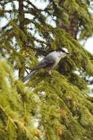 pájaro en el árbol durante el día foto