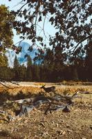 Landscape through leaves