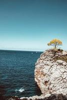 Tree on a rock near water