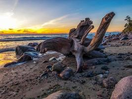 Driftwood on a seashore during golden hour photo