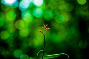 Orange flower against a green background photo