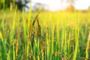 Green field in sunlight