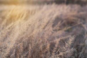 Blurry grass background