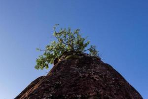 árbol contra un cielo azul foto