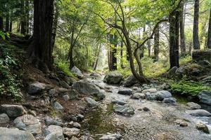 Creek in Big Sur