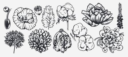 un conjunto de ilustraciones sobre un tema floral. vector