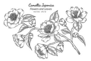 flor de camelia japonica dibujada a mano vector
