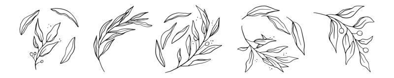 Set of hand drawn line-art leaves vector