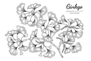 Hand drawn ginkgo line art branches vector