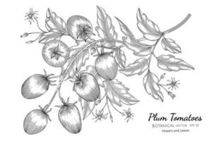 dibujado a mano ramas de tomate ciruela arte lineal vector