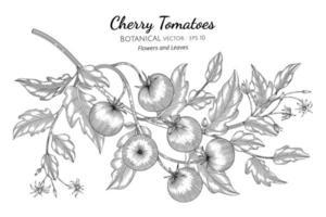 dibujado a mano tomates cherry ramas arte lineal vector