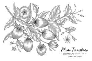 Hand drawn plum tomato branches line art vector