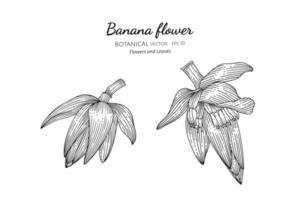 Hand drawn banana heart and flower line art vector