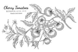 Hand drawn cherry tomatoes branches line art vector
