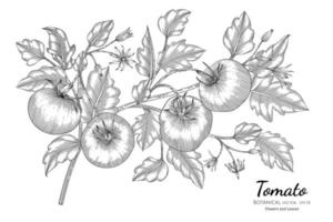 Hand drawn tomato branches line art vector