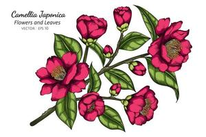 Hand Drawn Pink Camellia Japonica Flower vector