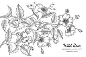 Hand Drawn Wild Rose Flowers and leaves line art