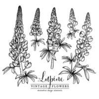 flor de lupino elementos dibujados a mano vector