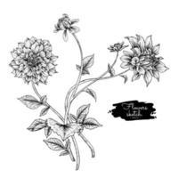 dibujos de flores de dalia. vector