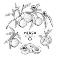 elementos dibujados a mano de fruta de melocotón.