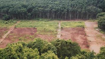 Deforestation in a tropical rain forest
